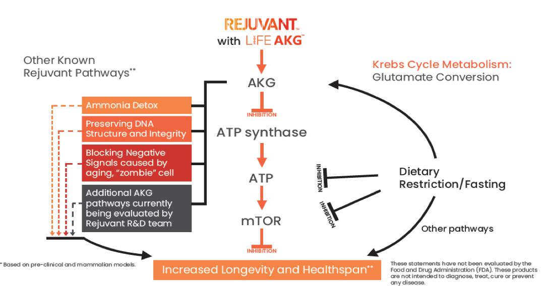Rejuvant with LifeAKG Diagram